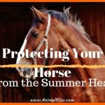 Protecting Your Horse From the Summer Heat