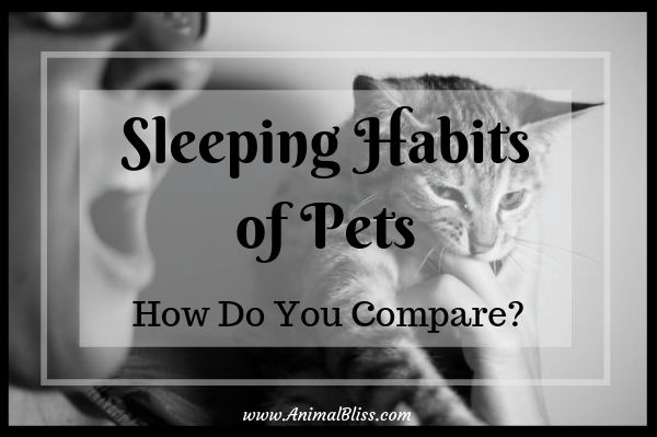 Sleeping Habits of Pets: How do You Compare?