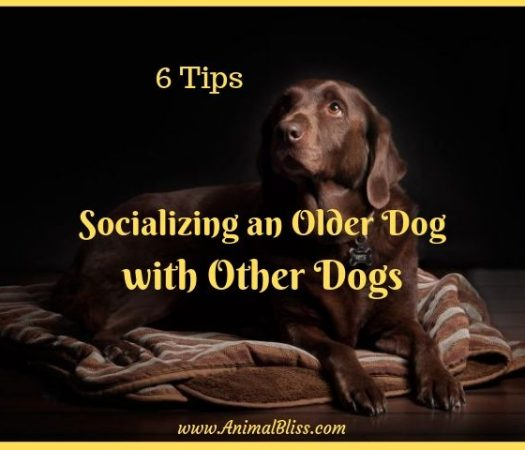 6 Tips for Socializing an Older Dog with Other Dogs
