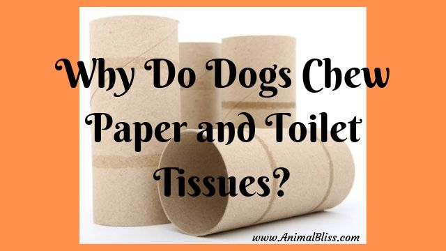 Why Do Dogs Chew Paper and Toilet Tissues?
