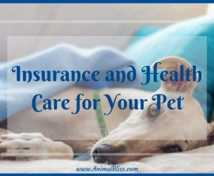 A Guide to Insurance and Health Care for Your Pet