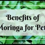 Benefits of Moringa for Pets – Alternative Healing