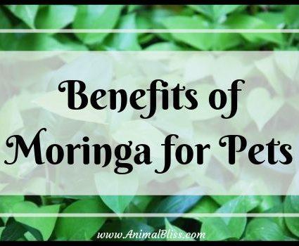 Benefits of Moringa for Pets - Alternative Healing