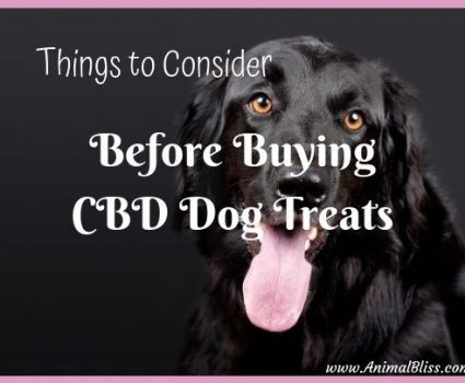 Things to Consider Before Buying CBD Dog Treats