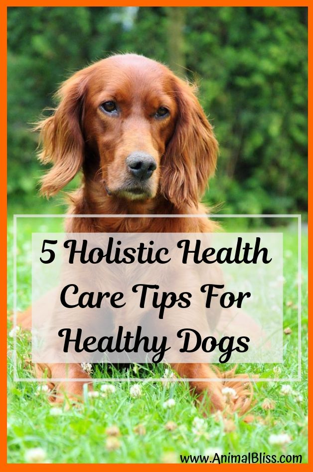 5 Holistic Health Care Tips For Healthy Dogs