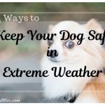4 Ways to Keep Your Dog Safe in Extreme Weather