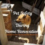 Tips for Pet Safety During Home Renovations