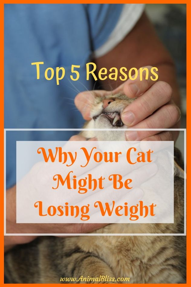 Top 5 Reasons Why Your Cat Might Be Losing Weight