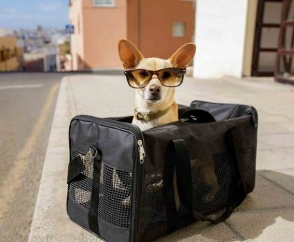 Is Pet Boarding with Your Vet Better than Hiring a Sitter?