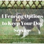 4 Dog Fence Options to Keep Your Pup Secure