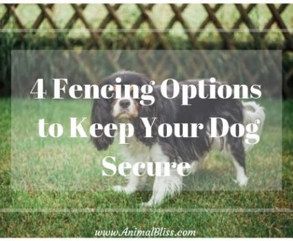 4 Fencing Options to Keep Your Dog Secure