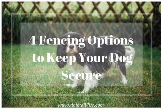 Dog Fence Options to Consider