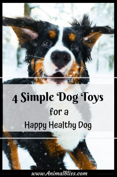 4 Simple Dog Toys for a Happy Healthy Dog