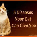 5 Diseases Your Cat Can Give You: A Mini Guide