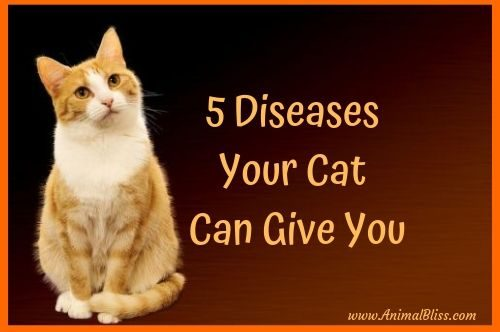 5 Diseases Your Cat Can Give You