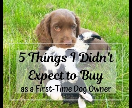 5 Things I Never Expected to Need as a First-Time Dog Owner