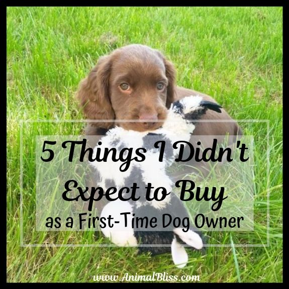 First time dog owner checklist
