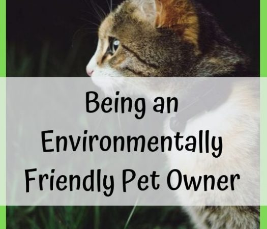 5 Tips For Being an Environmentally Friendly Pet Owner