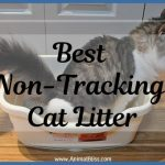Best Non-Tracking Cat Litter in 2019 Review