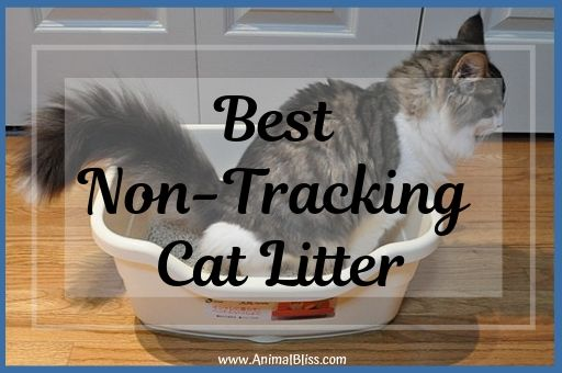 Best Non-Tracking Cat Litter Review 2019