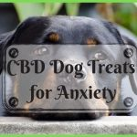 CBD Dog Treats for Anxiety – Natural Remedies