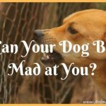 Can Your Dog Be Mad at You? Read the Signs