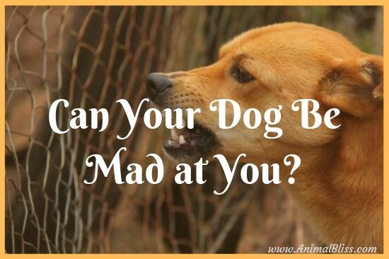Can Your Dog Be Mad at You? Some Tell-Tale Signs
