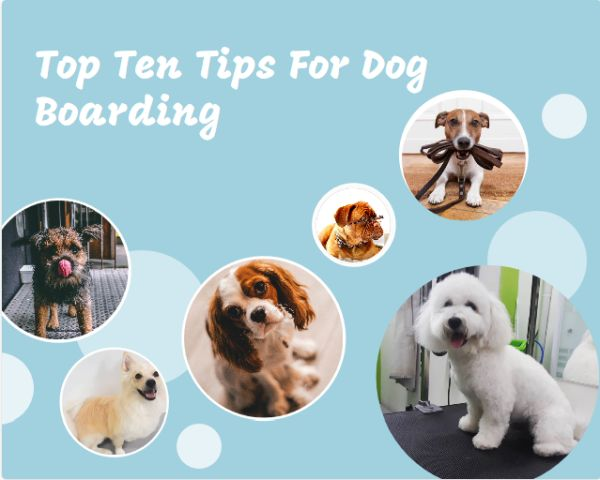 10 Tips for Finding a Good Dog Boarding Facility