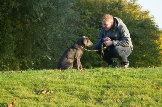 How Owning a Dog Will Change Your Life