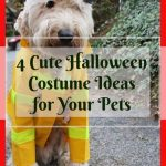 Cute Halloween Costume Ideas for Your Pets