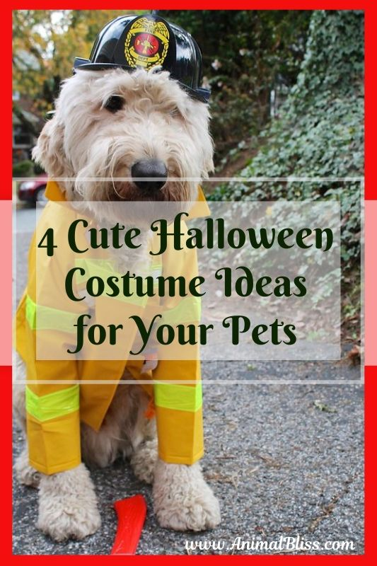 4 Cute Halloween Costume Ideas for Your Pets