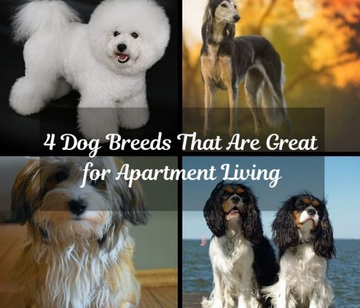 4 Dog Breeds That Are Great for Apartment Living