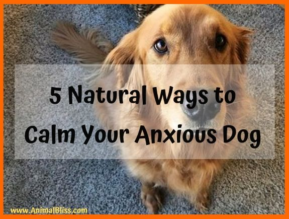 5 Natural Ways to Calm Your Dog