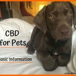 CBD for Pets: Basic Information Your Vet Wants You to Know
