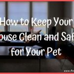 How to Keep Your House Clean and Safe for Your Pet