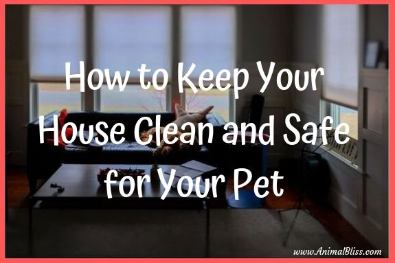 How to keep your house clean and safe for your pet(s).