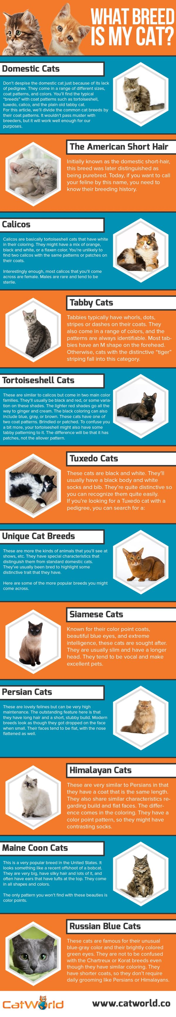 List Of Popular Cat Breeds What Breed Is Your Cat
