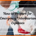 How to Prepare for Emergency Veterinarian Expenses