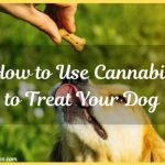 How to Use Cannabis to Treat Your Dog: CBD for Dogs