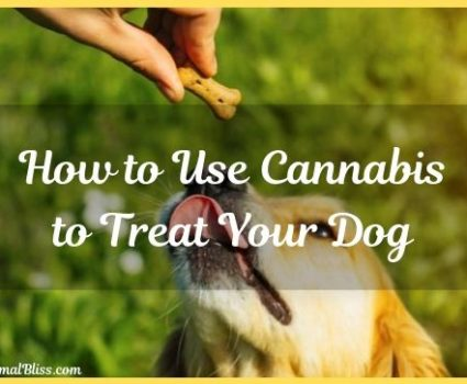 How to Use Cannabis to Treat Your Dog