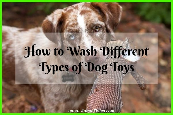 How to Wash Different Types of Dog Toys