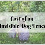 How Much Does an Invisible Dog Fence Cost?