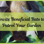 Invite Beneficial Bats to Patrol Your Garden