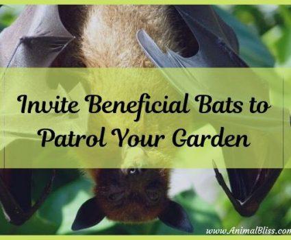 Invite Beneficial Bats To Patrol Your Garden