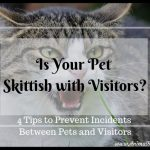 Is Your Pet Skittish with Visitors? 4 Tips to Prevent Incidents
