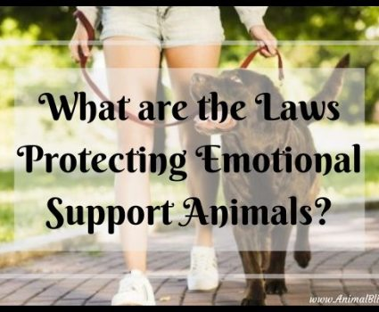 What are the Laws Protecting Emotional Support Animals?