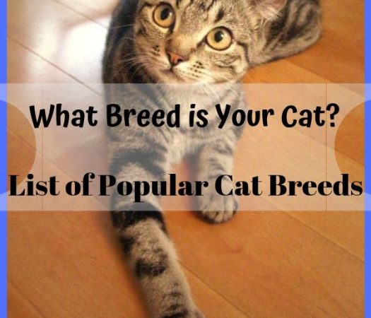 List of Popular Cat Breeds: What Breed is Your Cat?