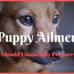 4 Puppy Ailments You Should Financially Prepare For