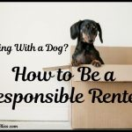 How to Be a Responsible Renter When You Have Pets
