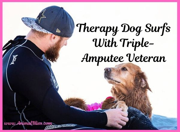 Therapy Dog Surfs With Triple-Amputee Veteran, Healing Power of Dogs